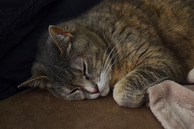 cat-2377351_640